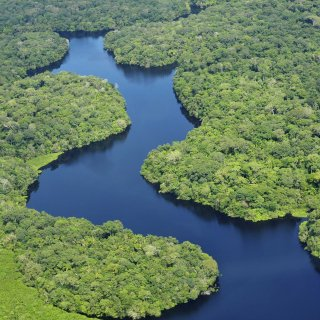 017 - Amazon Rainforest near Manaus - Neil Palmer, CIAT - A SA