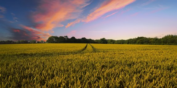 Reaping the benefits from studying the natural capital of crops